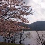 桜も綺麗だった!