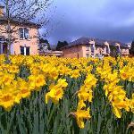 Dance Daffodils!