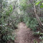 Walking trail to Spiaggia della Biodola