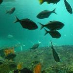 Sydney Aquarium 3