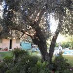 El Olivo y las plantitas de Miriam