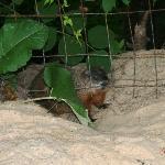 Le Petit Manoir - una delle marmotte del giardino