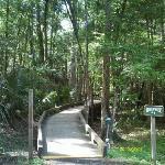 Boardwalk to Withlacoochee River
