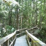 Boardwalk to Rainbow River