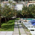 Lemon trees and pool.