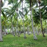 Il giardino di palme. Incredibile!!!!