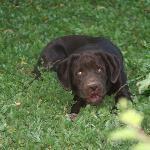 the adorable Coco