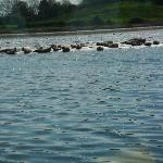 Seals basking in Donegal Bay