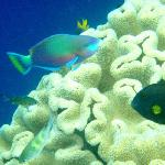 house reef, but there's so much more