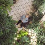 Laszlo in the garden