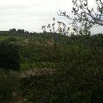 View from the kitchen (Il Padronale)