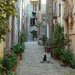 Altstadt mit Katze