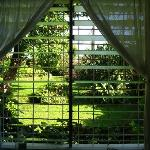 The garden from the bedroom