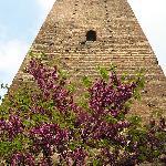 La torre di Novi in primavera
