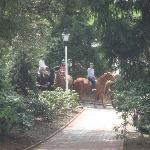 Equestrian Activites