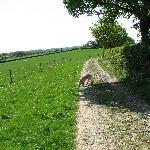Looking Towards Castle Farm