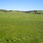 Santa Ysabel Open Space Preserve