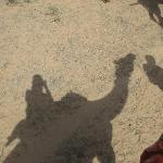 Camel Trek in the Thar Desert
