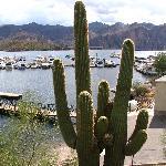 Lake Saguaro