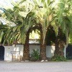 Entrada con tres grande palmeras