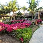 beautiful gardens everywhere