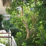bista jardin desde balcon