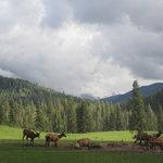 Wild Life viewing at the Historic Gilmore Ranch