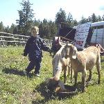 Play with the goats
