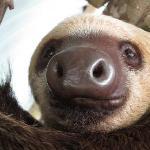 """Sloth; """"Wilders"""""""