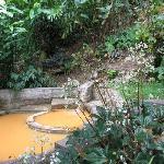 Foto de Papillote Tropical Gardens