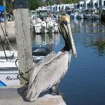 At the Big Pine Key Boat Rental