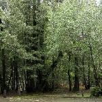 Brookings - Loeb State Park