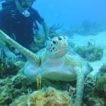 Aqua Marine Dive Center
