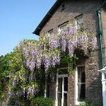 Beautiful wisteria on the terrace