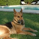 Maya, la très câline chienne du Clos Saint-Paul
