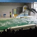 おたる水族館の写真その2