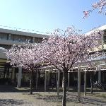 Frühling an der Uni-Klinik Heidelberg