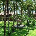 the lush garden