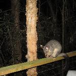 One of our night time visitors