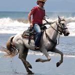 Dare to Canter on the Beach