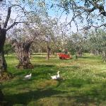 The resort is full of country lanes with olive tree orchards that are home to geese, ponies, goa