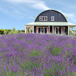 Lavender Hill Luxury B & B