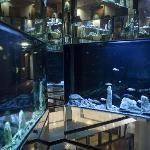 4 Storey Aquarium