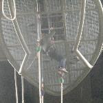 The cage/jump platform.