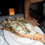 """Medium"" sized lobster @ Saturday Lobster Fest"