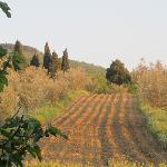 Photo de Agriturismo Poggio al Sole