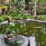 Fish and Tortoise Pool