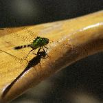 Dragonfly on one of Bonnie's paddles.