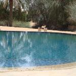 nager en contemplant les oryx