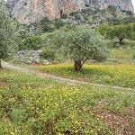 Olive Grove in Alora